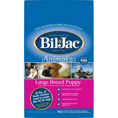 """ביל ג'ק גור גזע גדול 13.6 ק""""ג Bil-jac puppy"""