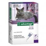 """אמפולות אדוונטג' לחתולים במשקל של מעל 4 ק""""ג"""