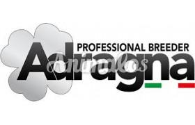 אדרגנה|Adragna