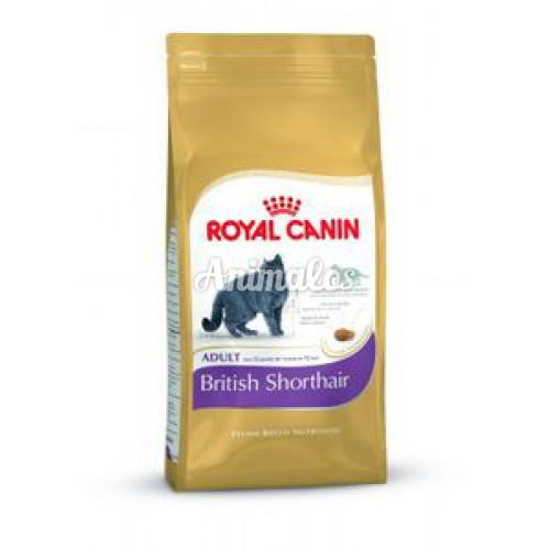 "רויאל קנין לחתול בריטי 4 ק""ג Royal canin"